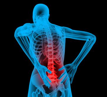 Mozgás, csontrendszer és ízület