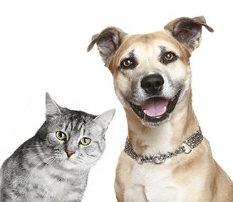 Állatgyógyászat